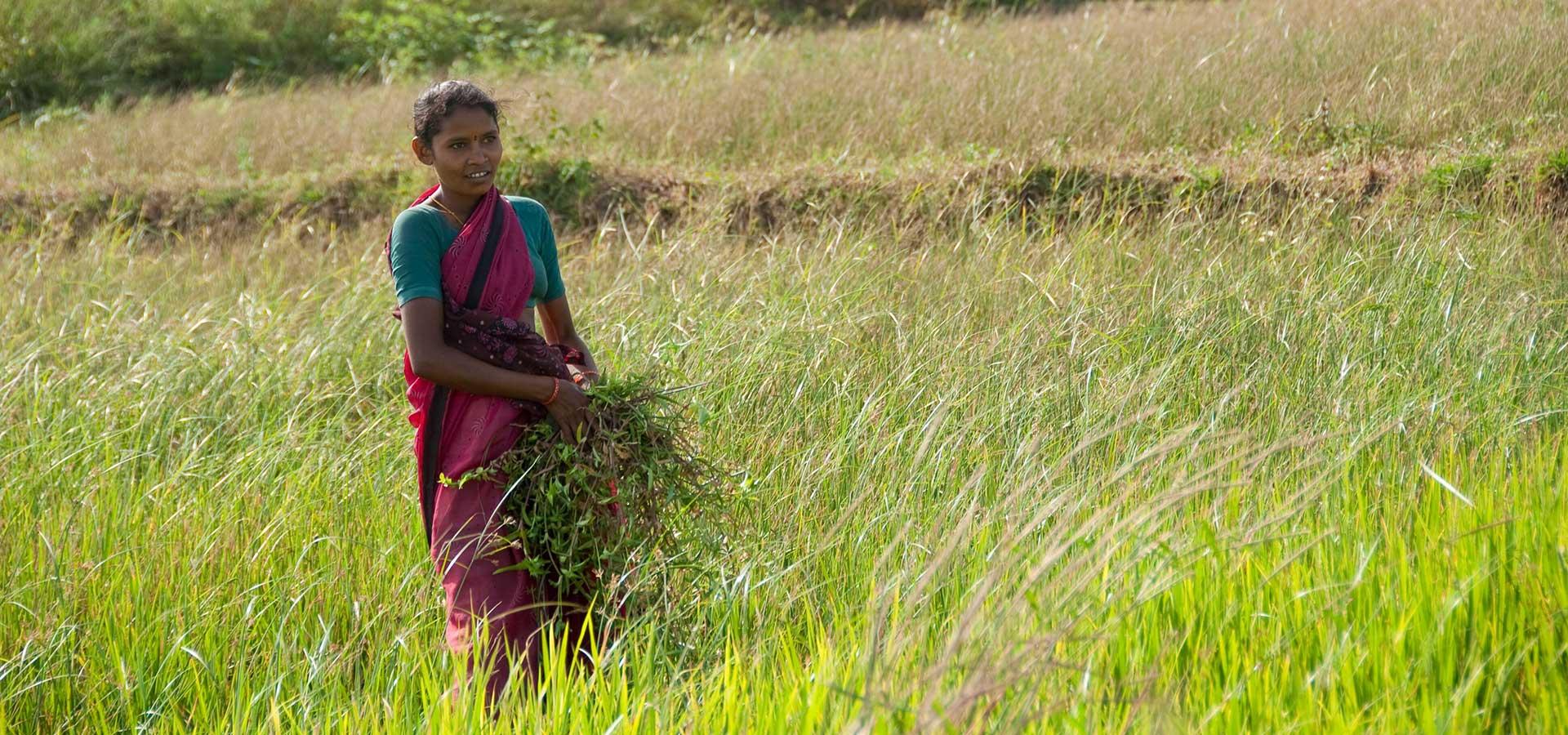 Landesa in India - Landesa