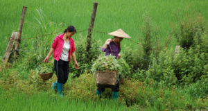 Women farmers in rural China face appropriation of their land in favor of commercial development