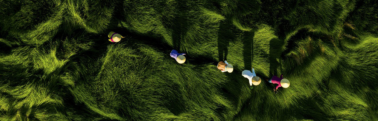 Aerial photo of 5 women making their way through a field of tall grass and long shadows.